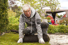 Gardener establishing lawn Stock Photography