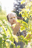 Gardener examining plants at garden Stock Photos