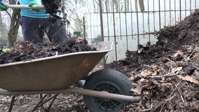 Gardener farmer load compost pile old wheelbarrow. Work in farm stock footage