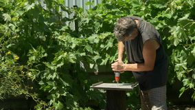 Gardener fastened metal plate to stump with screws. Production table in garden. stock video