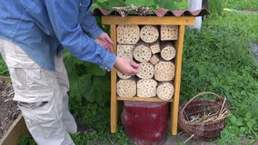 Gardener filling insect hotel with straw stock video footage