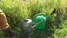 Gardener filling water cans, 4K stock video footage