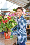 Gardener with flamingo flower in nursery shop Stock Image