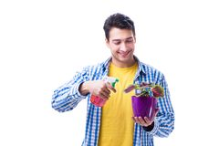 Gardener florist with a flower in a pot isolated on white backgr. Ound Royalty Free Stock Images