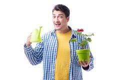 Gardener florist with a flower in a pot isolated on white backgr. Ound Royalty Free Stock Image