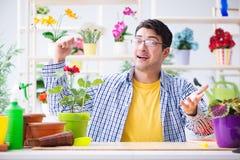 The gardener florist working in a flower shop with house plants. Gardener florist working in a flower shop with house plants Stock Images