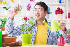 The gardener florist working in a flower shop with house plants. Gardener florist working in a flower shop with house plants Stock Photography