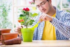 The gardener florist working in a flower shop with house plants. Gardener florist working in a flower shop with house plants Royalty Free Stock Photos