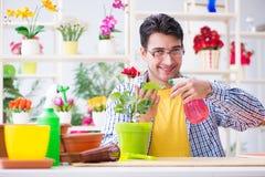 The gardener florist working in a flower shop with house plants. Gardener florist working in a flower shop with house plants Royalty Free Stock Photography