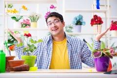 The gardener florist working in a flower shop with house plants. Gardener florist working in a flower shop with house plants Stock Image