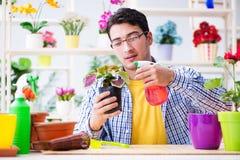 The gardener florist working in a flower shop with house plants. Gardener florist working in a flower shop with house plants Royalty Free Stock Image