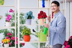 The gardener florist working in a flower shop with house plants. Gardener florist working in a flower shop with house plants Royalty Free Stock Images