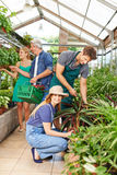 Gardener and florist working in nursery shop Royalty Free Stock Images