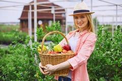 Gardener with fresh vegetables Stock Images
