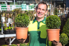 Gardener at garden center posing with boxtrees Royalty Free Stock Photography