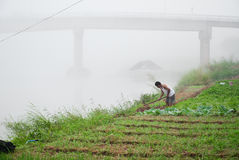 Gardener. S plant vegetables on the river stock image