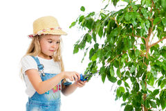 Gardener girl cutting leaves from tree Stock Images
