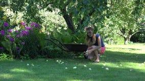 Gardener girl gathering windfall rotten apples fruits to wheelbarrow in farm garden. 4K stock video footage