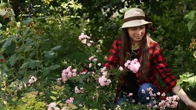 Gardener girl trimming flowers with secateurs. In the garden. Young woman taking care of rose bushes. People, gardening, care of flowers, hobby concept stock video footage