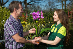 Gardener giving an orchid to customer or client. In nursery Stock Photography