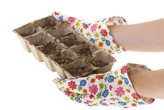 Gardener, Gloves Holding Compost Pots. Floral Patterned Gloves Holding Eco-friendly Composted Cow Manure Pots filled with potting soil, isolated on white 6271 Stock Photos