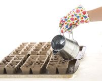 Gardener, Gloves Pouring water into Pots. Gardener wearing colorful flower patterned gardening gloves is using a watering can to water potted soil and seeds in Royalty Free Stock Image