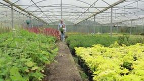 Gardener and grandchild walking through greenhouse Stock Photos