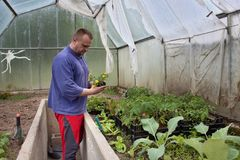 Gardener in a greenhouse Royalty Free Stock Photography