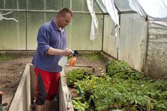 Gardener in a greenhouse Stock Images