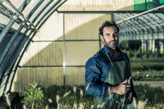 Gardener in a greenhouse Stock Image