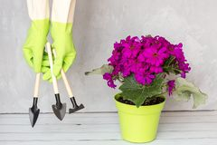 Gardener hand in rubber gloves holding garden instrument, next standing flower pot. Gardening, planting and people concept royalty free stock images