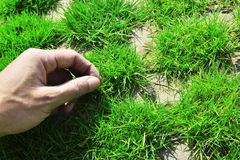 Gardener hands care the green grass Royalty Free Stock Images