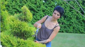 Gardener in the hands of the gardener, cutting the bush. Portrait of a girl, garden shears in the hands of the gardener, cutting the bush stock footage