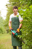 Gardener with hedge trimmer royalty free stock photo