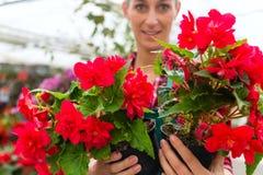 Gardener in her green house flower shop Stock Photos