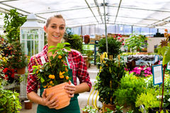 Gardener in her green house flower shop Royalty Free Stock Photos