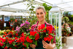 Gardener in her green house flower shop Stock Images