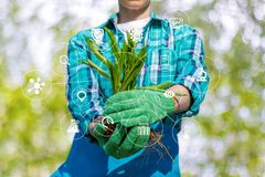 Gardener in his hands shows seedlings . Royalty Free Stock Images