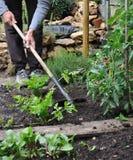 Gardener Hoeing Royalty Free Stock Photo