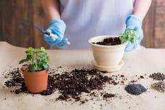 Free Gardener Hold Shovel Work Indoor Gardening Hobby Royalty Free Stock Images - 139482539