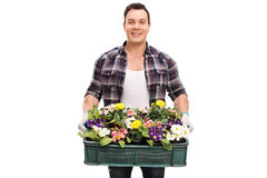 Gardener holding a crate full of flowers Royalty Free Stock Images