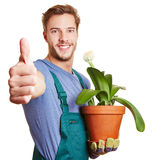 Gardener holding his thumb up Stock Image