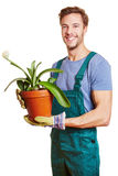 Gardener holding paintbrush plant Stock Photo