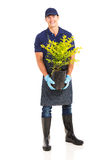 Gardener holding plant Stock Photo