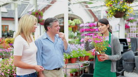 Gardener holding a plant talking to customer Royalty Free Stock Images