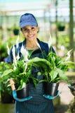 Gardener holding plants Stock Image