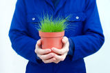 Gardener holding potted green grass Stock Photos