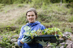 Gardener holding seedlings collection to be planted Stock Photo