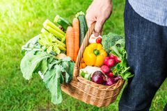 Gardener holds wicker basket filled with vegetables Stock Photos
