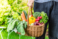 Gardener holds wicker basket filled with vegetables royalty free stock photo